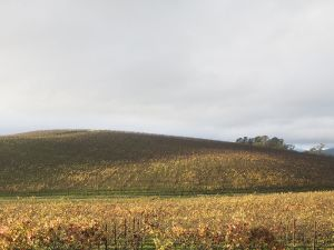 The same location in November, 2006, showing vines covering the hillside and foreground.