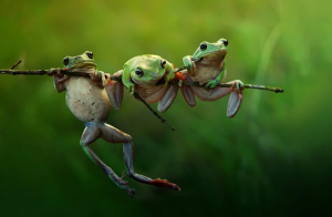 Frog Story by Harfian Herdi Three cute frogs at morning light.