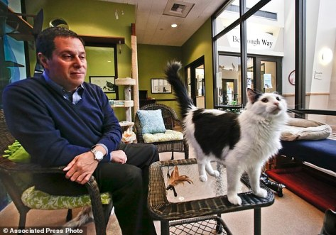 "Dr. Gary Weitzman, president and CEO of the San Diego Humane Society and SPCA and author of the new National Geographic book ""How to Speak Cat, observes the actions of Pepper, a black and white  resident of Humane Society shelter Wednesday, April 8, 2015, in San Diego.    (AP Photo/Lenny Ignelzi)"