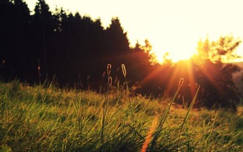 good morning morning sunshine