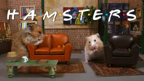 Friends as Hamsters